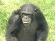 Chimpanzee in I like To Eat.png