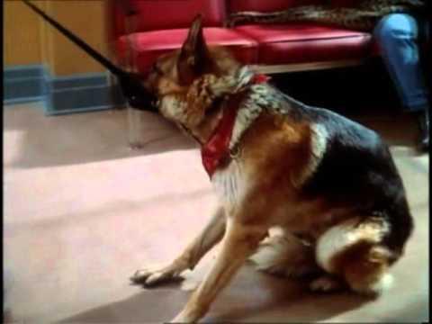 German Shepherd (Dr. Dolittle)