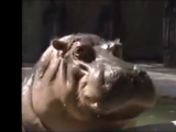 Hippo (Barney & Friends)