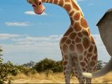 Giselle the Giraffe