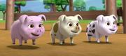 Profile - Piglets (Paw Patrol).png