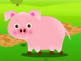 Pig (AppuSeries)