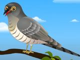 Cuckoo (AppuSeries)