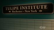 Tulipe Institute 4