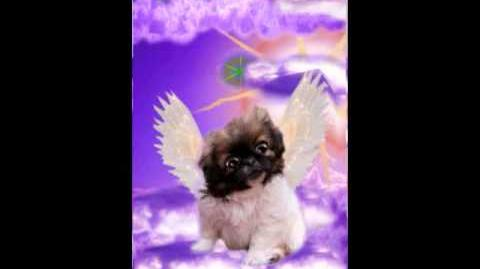 Angel in a Fur Coat book trailer