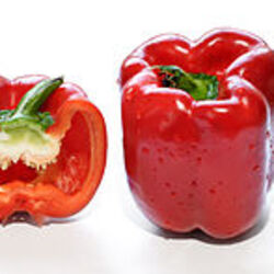 Peppers originating from North America