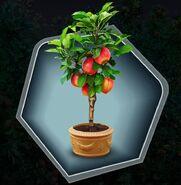 Trr trh apple tree sapling