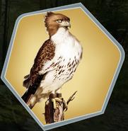 MOTY Hawk as seen in Ch. 4