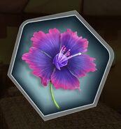 TRM Vescovi flower