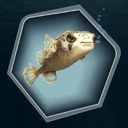 White cream tan live fish