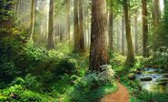 ForestWithPath