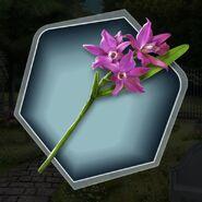 Oh2 laelia orchid flower stem