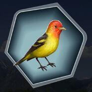 HC bird prop