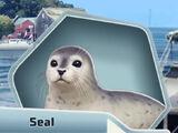 Rising Tides Adoptable Animals