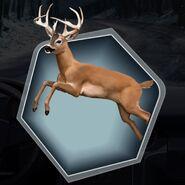 Deer Doe Buck