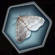 Thobm simon winter moth