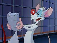 Brain gave Pinky a spellchecker