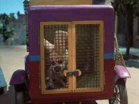 Vixen caught by dog catcher
