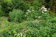 Chu's Garden 2010 a8