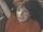 Pauline Peart