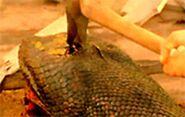 Anaconda stabbed by an Axe