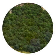 Forest (Civ5)