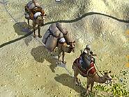 Caravan Camels
