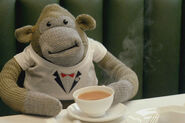 Monkey pg tips