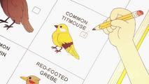 Clarence Cortos - Viendo Pájaros con Guyler 00006