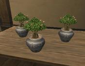 Flowering plants.png