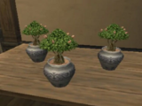 Gardening/Tree Saplings Recipes