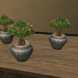 Gardening/Tree Saplings Recipes
