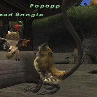 Popopp