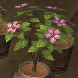 Gardening/Fruit Seeds Recipes