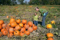 Pumpkinfarm.jpg