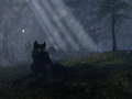 Tempest's Wolf