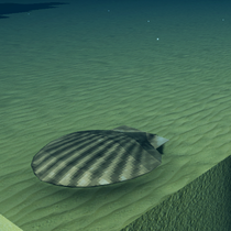 Brown Sea Shell.png
