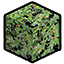 Cranberry Leaf.png