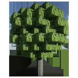Acacia Seed.png