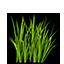 Green Sea Grass.png