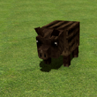 Small Boar.png