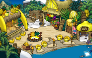 Festival of Fruit Cove 2