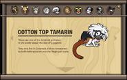 Endangered Animals Cotton Top Tamarin