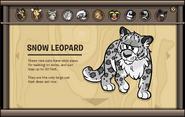 Endangered Animals Snow Leopard