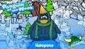 Halopona