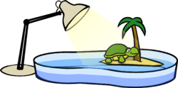 Turtle Bowl.PNG