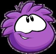 PurplePuffleStaring