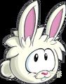 18. Conejo Blanco