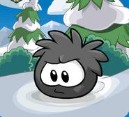 Puffle Negro 14