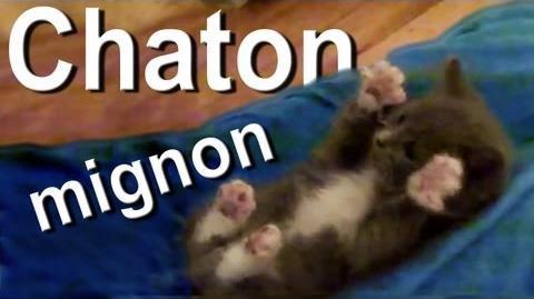Chaton mignon -) the vidéo -)
